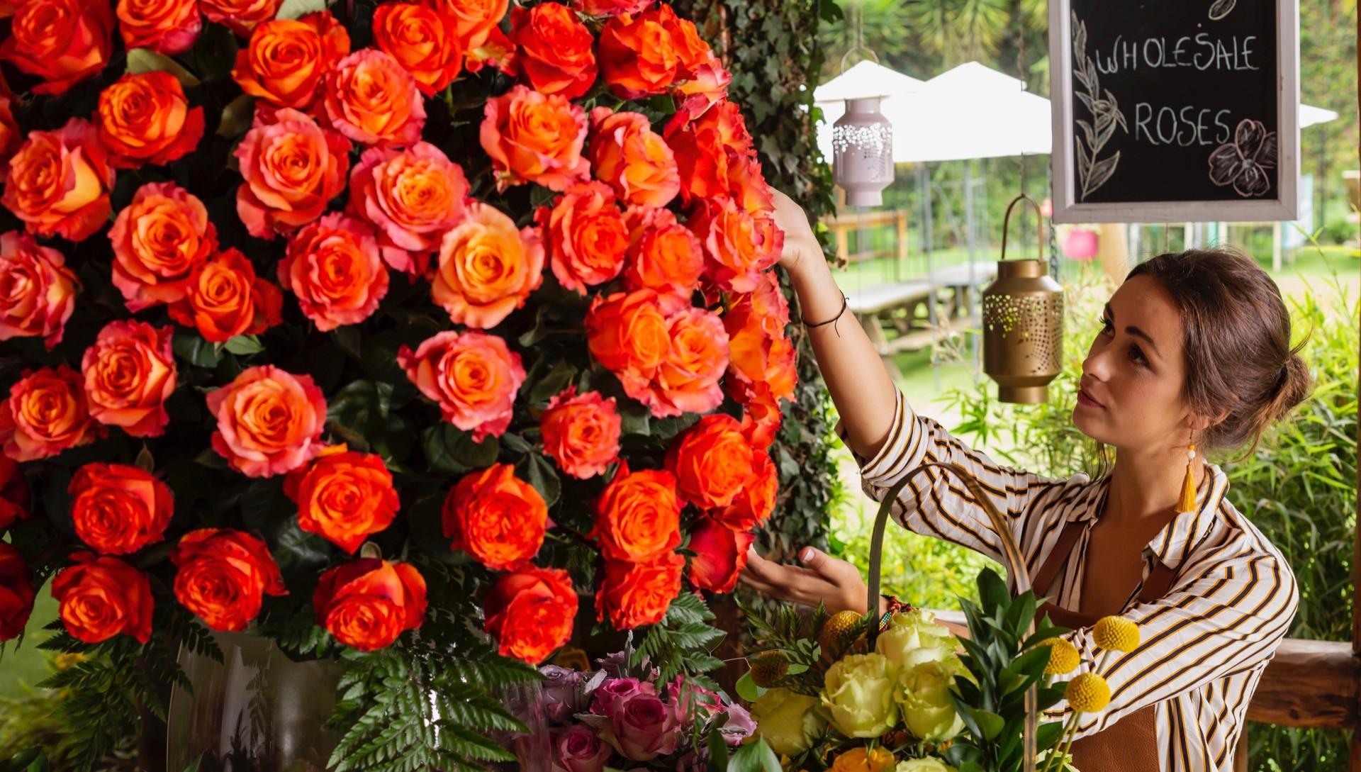 Bellevue Roses Wholesale