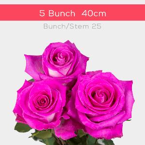40 cm